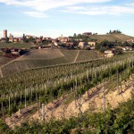 resized_Barbaresco